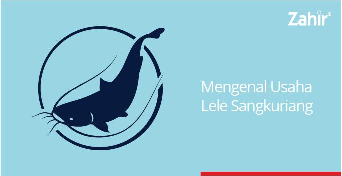 Mengenal Usaha Lele Sangkuriang Milik Fauzan Hangriawan Zahir Accounting Blog